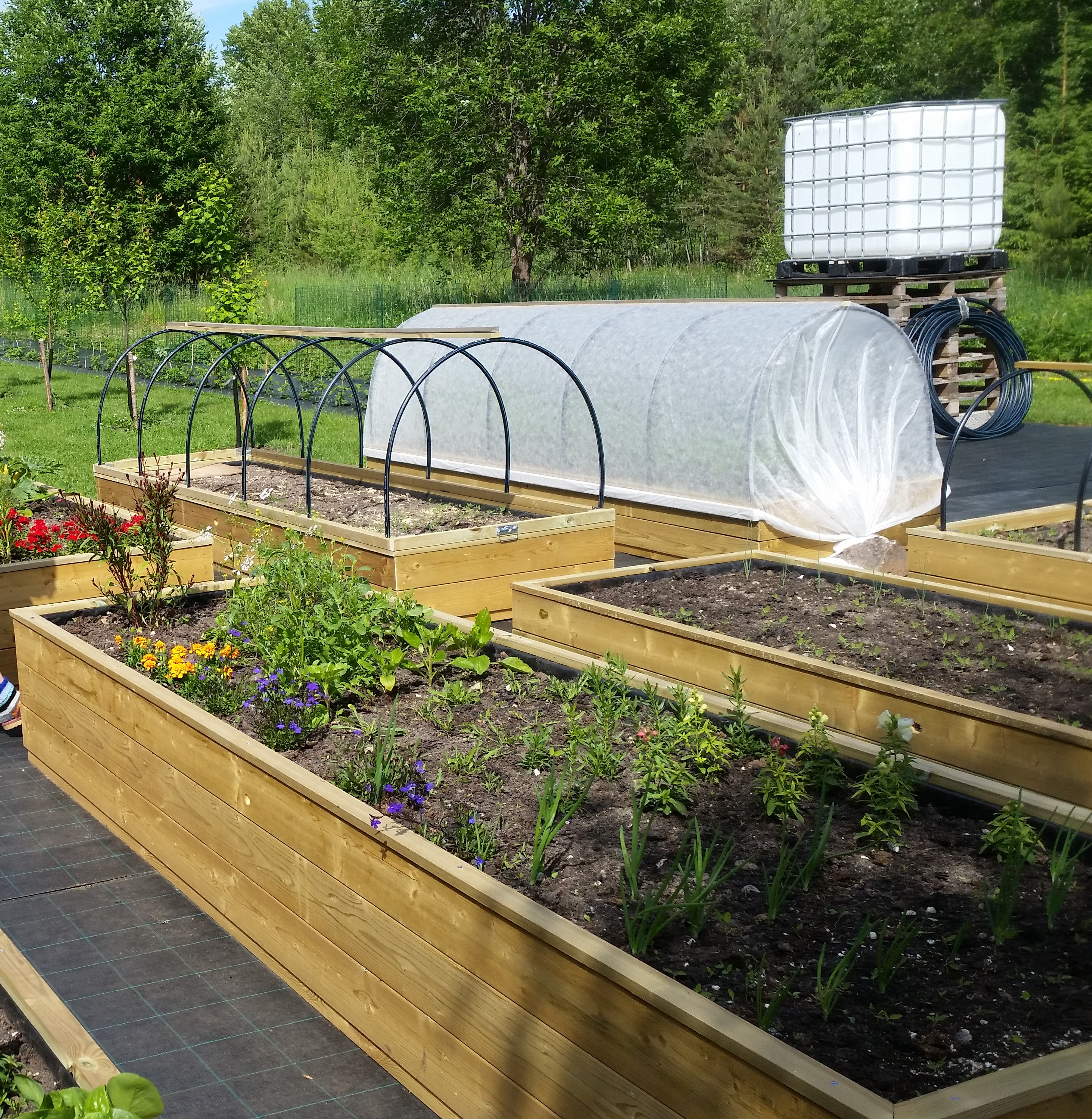 The Vegetable Garden in Estonia
